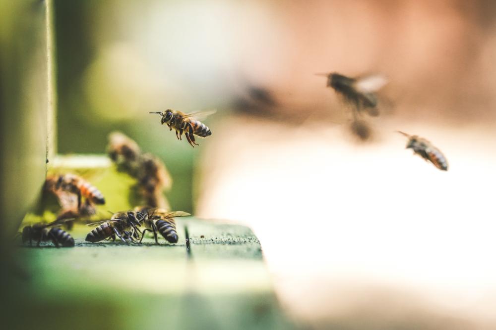 蜂の巣アイキャッチ